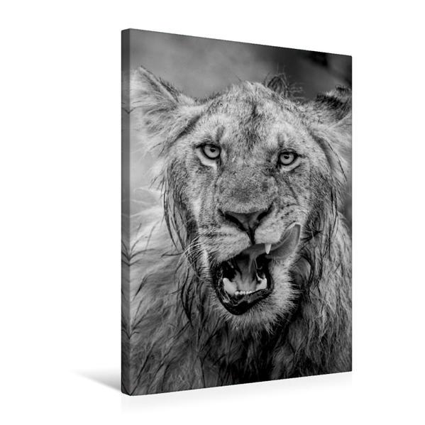 Premium Textil-Leinwand 50 cm x 75 cm hoch, Ein Motiv aus dem Kalender FineArt in Black and White: Der König der Löwen | Wandbild, Bild auf Keilrahmen, Fertigbild auf echter Leinwand, Leinwanddruck - Coverbild