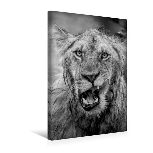 Premium Textil-Leinwand 30 cm x 45 cm hoch, Ein Motiv aus dem Kalender FineArt in Black and White: Der König der Löwen | Wandbild, Bild auf Keilrahmen, Fertigbild auf echter Leinwand, Leinwanddruck - Coverbild