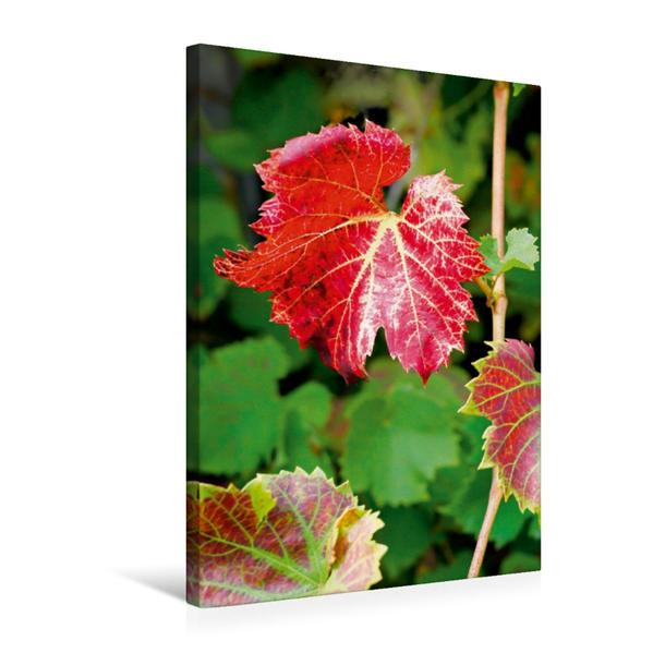 Premium Textil-Leinwand 50 cm x 75 cm hoch, Ein Motiv aus dem Kalender Wein und Sekt   Wandbild, Bild auf Keilrahmen, Fertigbild auf echter Leinwand, Leinwanddruck - Coverbild