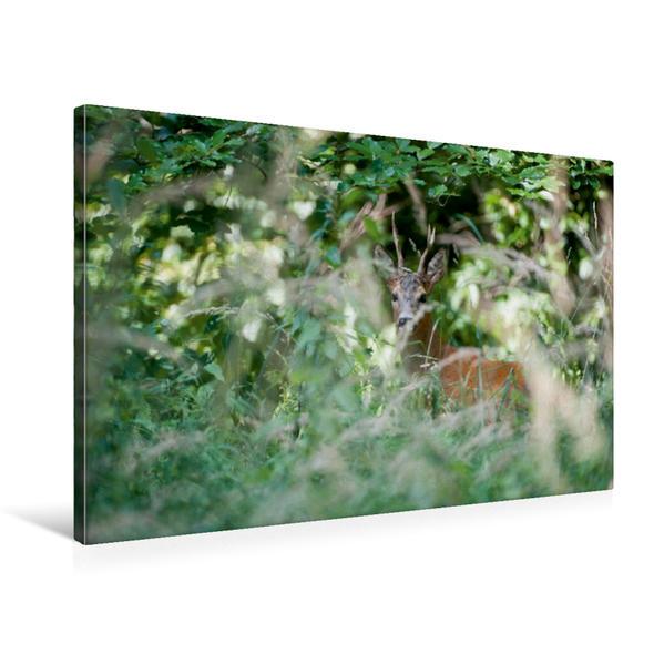 Premium Textil-Leinwand 75 cm x 50 cm quer, Heimlicher Rehbock | Wandbild, Bild auf Keilrahmen, Fertigbild auf echter Leinwand, Leinwanddruck - Coverbild
