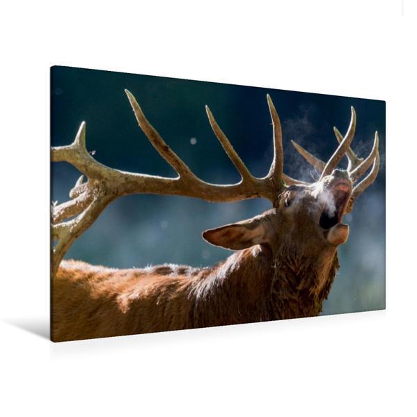 Premium Textil-Leinwand 120 cm x 80 cm quer, Die Hirschbrunft beginnt | Wandbild, Bild auf Keilrahmen, Fertigbild auf echter Leinwand, Leinwanddruck - Coverbild