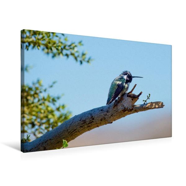 Premium Textil-Leinwand 75 cm x 50 cm quer, Grüner Kolibri in den USA | Wandbild, Bild auf Keilrahmen, Fertigbild auf echter Leinwand, Leinwanddruck - Coverbild