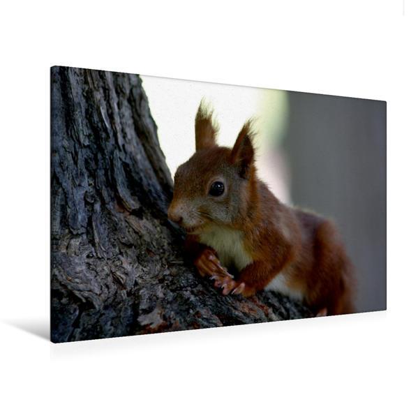 Premium Textil-Leinwand 120 cm x 80 cm quer, Ein Motiv aus dem Kalender Eichhörnchen | Wandbild, Bild auf Keilrahmen, Fertigbild auf echter Leinwand, Leinwanddruck - Coverbild