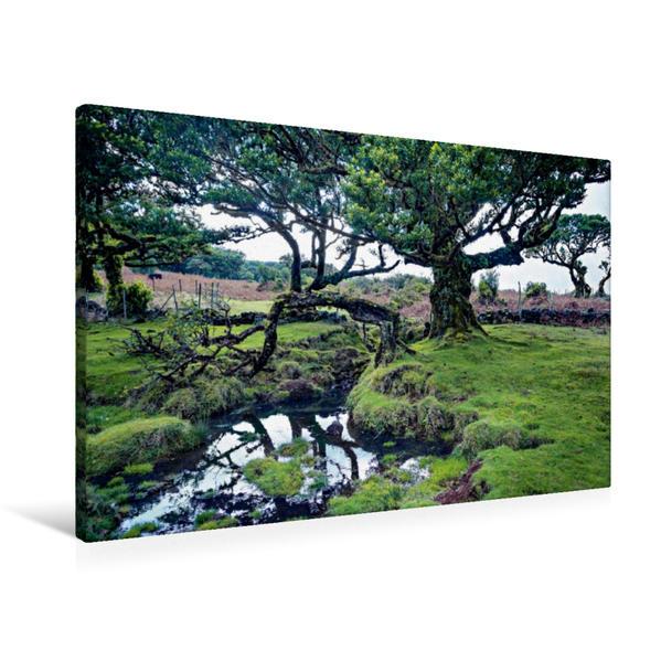 Premium Textil-Leinwand 90 cm x 60 cm quer, Lorbeerhain auf Madeira | Wandbild, Bild auf Keilrahmen, Fertigbild auf echter Leinwand, Leinwanddruck - Coverbild