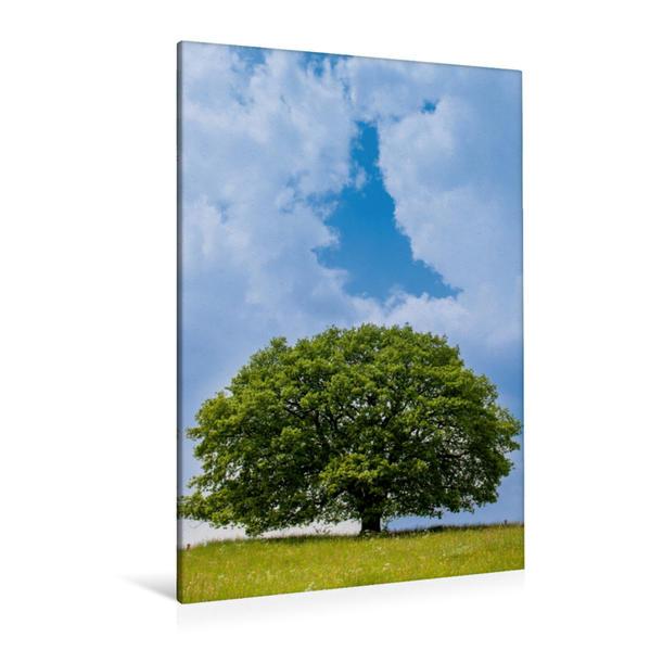 Premium Textil-Leinwand 80 cm x 120 cm  hoch, April: Mitte April ist es schon warm und die Eiche steht im wunderbaren Grün. | Wandbild, Bild auf Keilrahmen, Fertigbild auf echter Leinwand, Leinwanddruck - Coverbild