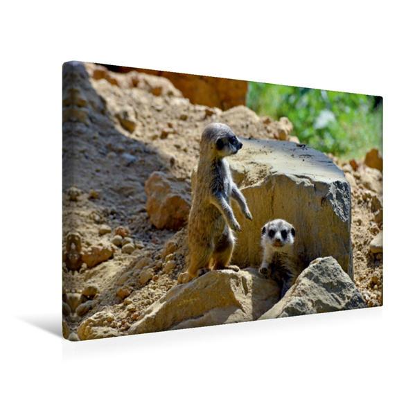 Premium Textil-Leinwand 45 cm x 30 cm quer, Ein Motiv aus dem Kalender Erdmännchens Kinderstube | Wandbild, Bild auf Keilrahmen, Fertigbild auf echter Leinwand, Leinwanddruck - Coverbild