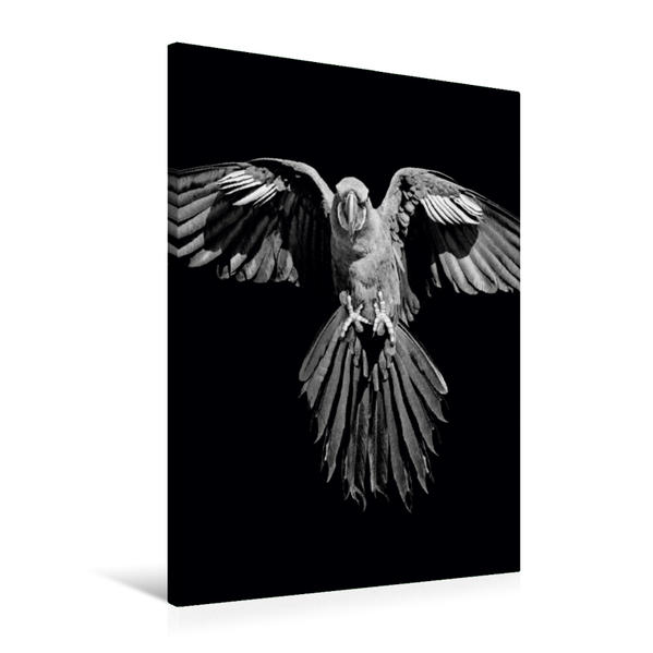 Premium Textil-Leinwand 60 cm x 90 cm hoch, Hyazinth-Ara - schwarz/weiß   Wandbild, Bild auf Keilrahmen, Fertigbild auf echter Leinwand, Leinwanddruck - Coverbild