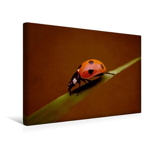 Premium Textil-Leinwand 45 cm x 30 cm quer, Glückskäfer | Wandbild, Bild auf Keilrahmen, Fertigbild auf echter Leinwand, Leinwanddruck - Coverbild