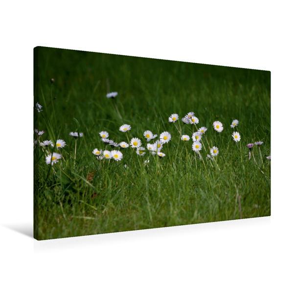 Premium Textil-Leinwand 90 cm x 60 cm quer, Ein Motiv aus dem Kalender Wälder und Wiesen   Wandbild, Bild auf Keilrahmen, Fertigbild auf echter Leinwand, Leinwanddruck - Coverbild