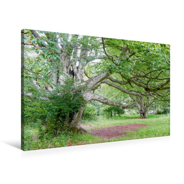 Premium Textil-Leinwand 90 cm x 60 cm quer, Baumkunst an der Tiefenhöhle | Wandbild, Bild auf Keilrahmen, Fertigbild auf echter Leinwand, Leinwanddruck - Coverbild