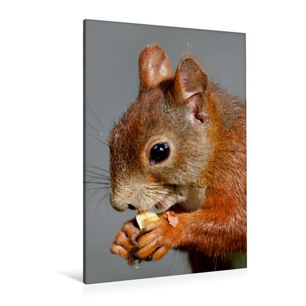 Premium Textil-Leinwand 80 cm x 120 cm  hoch, Ein Motiv aus dem Kalender Eichhörnchen | Wandbild, Bild auf Keilrahmen, Fertigbild auf echter Leinwand, Leinwanddruck - Coverbild