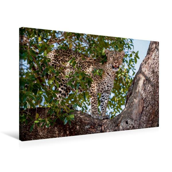 Premium Textil-Leinwand 75 cm x 50 cm quer, Ein Motiv aus dem Kalender Emotionale Momente: Leoparden | Wandbild, Bild auf Keilrahmen, Fertigbild auf echter Leinwand, Leinwanddruck - Coverbild