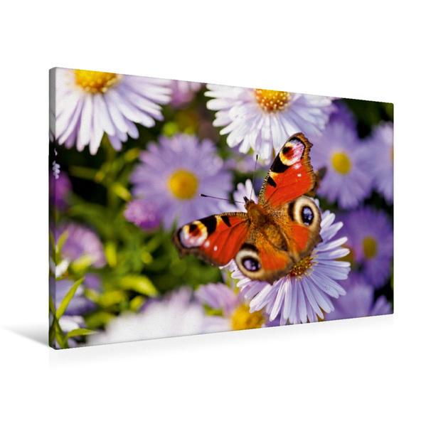 Premium Textil-Leinwand 90 cm x 60 cm quer, Schmetterling | Wandbild, Bild auf Keilrahmen, Fertigbild auf echter Leinwand, Leinwanddruck - Coverbild