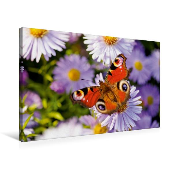 Premium Textil-Leinwand 75 cm x 50 cm quer, Schmetterling | Wandbild, Bild auf Keilrahmen, Fertigbild auf echter Leinwand, Leinwanddruck - Coverbild