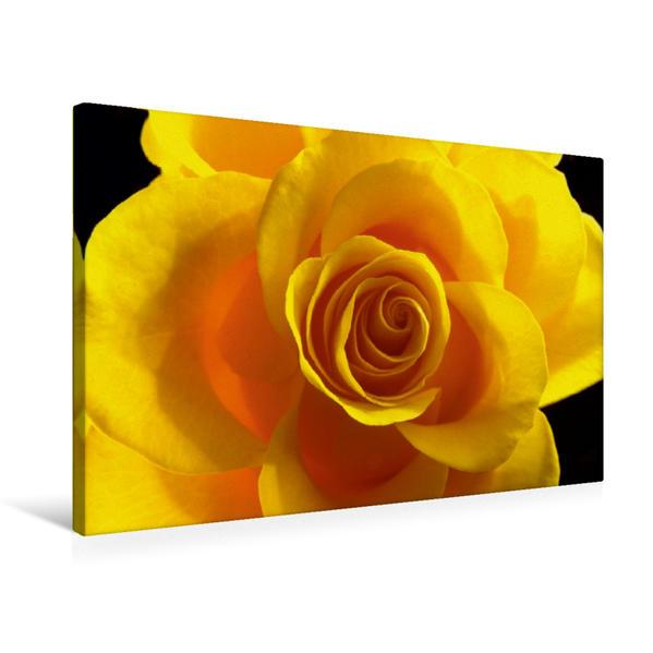 Premium Textil-Leinwand 75 cm x 50 cm quer, Ein Motiv aus dem Kalender Rosen einfach schön | Wandbild, Bild auf Keilrahmen, Fertigbild auf echter Leinwand, Leinwanddruck - Coverbild