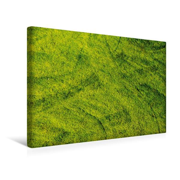 Premium Textil-Leinwand 45 cm x 30 cm quer, Spuren im Gras | Wandbild, Bild auf Keilrahmen, Fertigbild auf echter Leinwand, Leinwanddruck - Coverbild