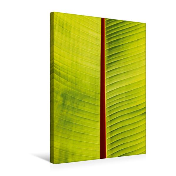 Premium Textil-Leinwand 50 cm x 75 cm hoch, Blatt | Wandbild, Bild auf Keilrahmen, Fertigbild auf echter Leinwand, Leinwanddruck - Coverbild
