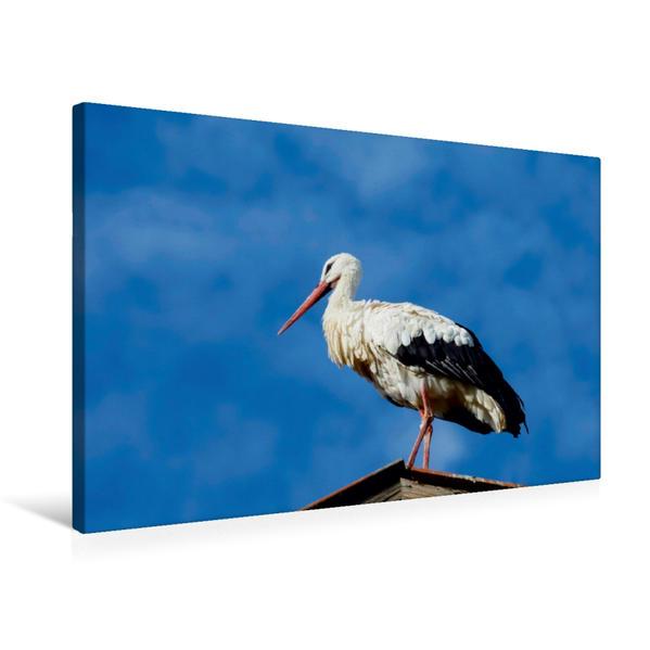 Premium Textil-Leinwand 75 cm x 50 cm quer, Ein Motiv aus dem Kalender Weißstörche | Wandbild, Bild auf Keilrahmen, Fertigbild auf echter Leinwand, Leinwanddruck - Coverbild