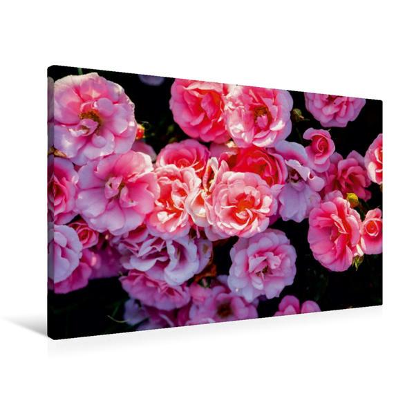 Premium Textil-Leinwand 90 cm x 60 cm quer, Ein Motiv aus dem Kalender Rosen einfach schön | Wandbild, Bild auf Keilrahmen, Fertigbild auf echter Leinwand, Leinwanddruck - Coverbild