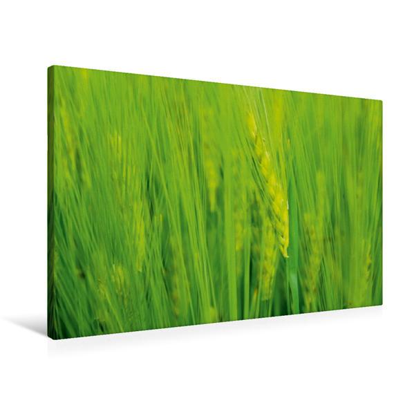 Premium Textil-Leinwand 90 cm x 60 cm quer, Ähre | Wandbild, Bild auf Keilrahmen, Fertigbild auf echter Leinwand, Leinwanddruck - Coverbild