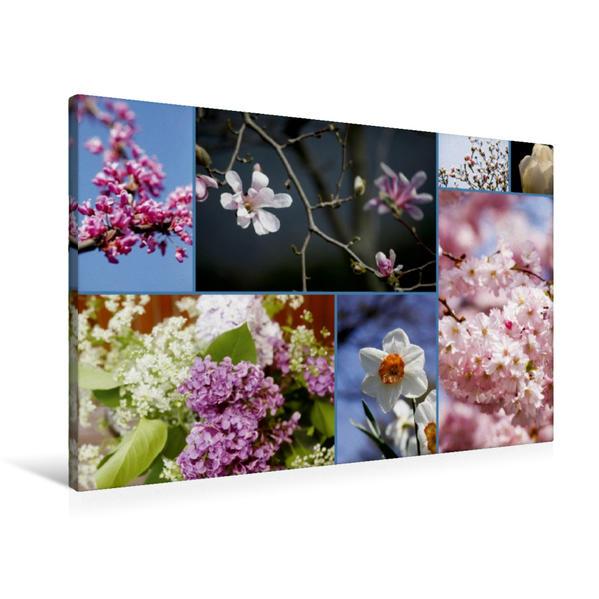 Premium Textil-Leinwand 90 cm x 60 cm quer, Ein Motiv aus dem Kalender Florales zu jeder Jahreszeit   Wandbild, Bild auf Keilrahmen, Fertigbild auf echter Leinwand, Leinwanddruck - Coverbild