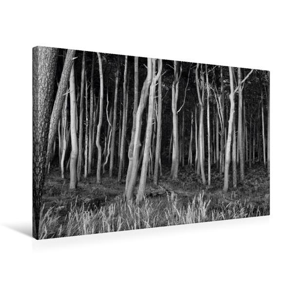 Premium Textil-Leinwand 75 cm x 50 cm quer, Wald am Weststrand Darß   Wandbild, Bild auf Keilrahmen, Fertigbild auf echter Leinwand, Leinwanddruck - Coverbild