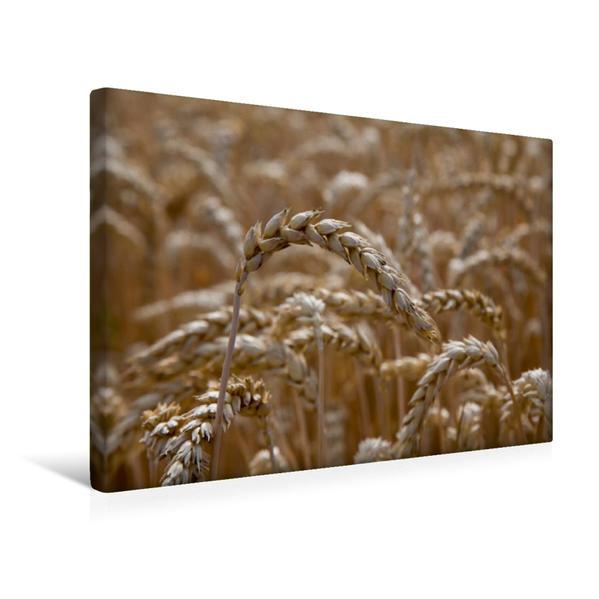 Premium Textil-Leinwand 45 cm x 30 cm quer, Weizenfeld nahe Ortsteil Schmiden | Wandbild, Bild auf Keilrahmen, Fertigbild auf echter Leinwand, Leinwanddruck - Coverbild