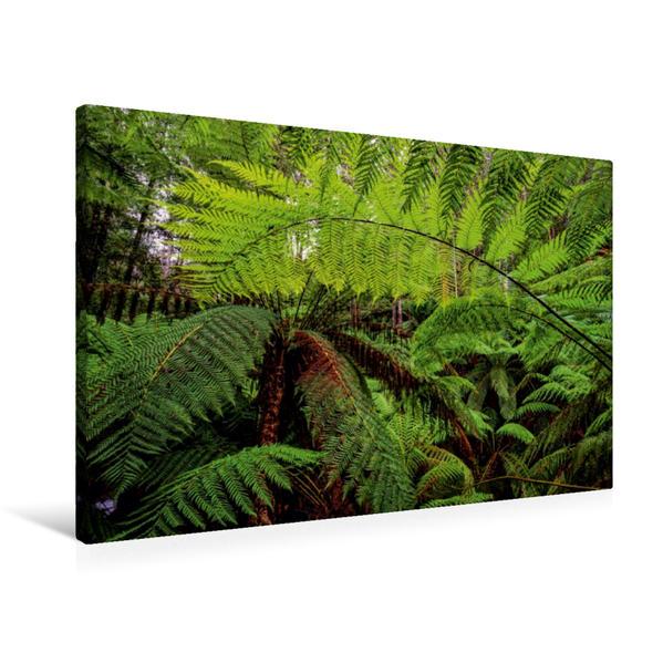 Premium Textil-Leinwand 90 cm x 60 cm quer, Farn im Regenwald von Tasmanien | Wandbild, Bild auf Keilrahmen, Fertigbild auf echter Leinwand, Leinwanddruck - Coverbild