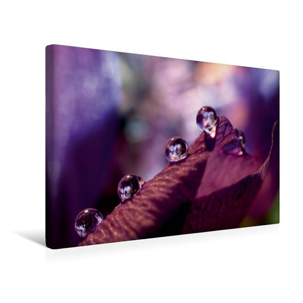 Premium Textil-Leinwand 45 cm x 30 cm quer, Wassertropfen auf Anemone | Wandbild, Bild auf Keilrahmen, Fertigbild auf echter Leinwand, Leinwanddruck - Coverbild
