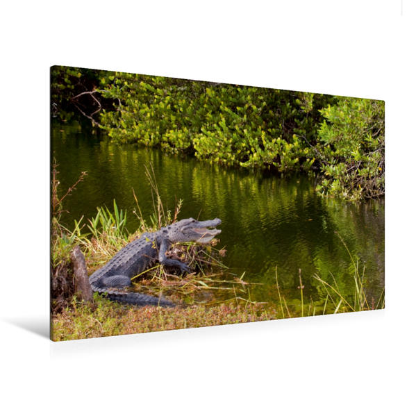 Premium Textil-Leinwand 120 cm x 80 cm quer, Everglades Nationalpark | Wandbild, Bild auf Keilrahmen, Fertigbild auf echter Leinwand, Leinwanddruck - Coverbild