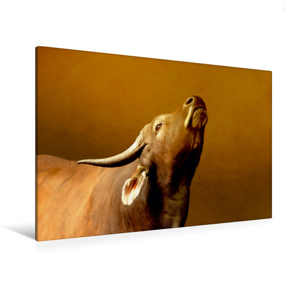 Premium Textil-Leinwand 120 cm x 80 cm quer, Büffel | Wandbild, Bild auf Keilrahmen, Fertigbild auf echter Leinwand, Leinwanddruck - Coverbild