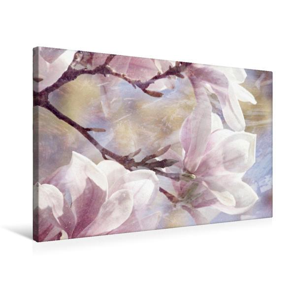 Premium Textil-Leinwand 75 cm x 50 cm quer, Magnolienstillleben | Wandbild, Bild auf Keilrahmen, Fertigbild auf echter Leinwand, Leinwanddruck - Coverbild