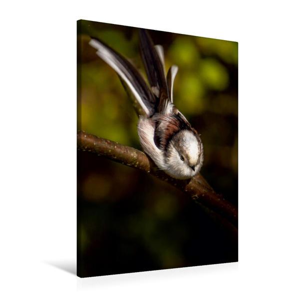 Premium Textil-Leinwand 60 cm x 90 cm hoch, Ein Motiv aus dem Kalender Meisen vor unserer Haustüre | Wandbild, Bild auf Keilrahmen, Fertigbild auf echter Leinwand, Leinwanddruck - Coverbild