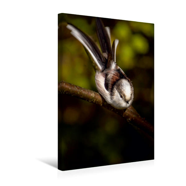 Premium Textil-Leinwand 30 cm x 45 cm hoch, Ein Motiv aus dem Kalender Meisen vor unserer Haustüre | Wandbild, Bild auf Keilrahmen, Fertigbild auf echter Leinwand, Leinwanddruck - Coverbild