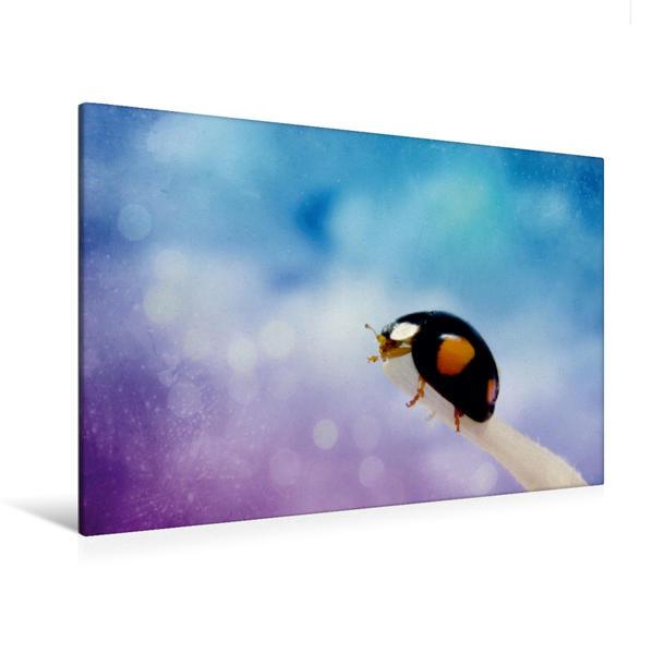 Premium Textil-Leinwand 120 cm x 80 cm quer, Käfer | Wandbild, Bild auf Keilrahmen, Fertigbild auf echter Leinwand, Leinwanddruck - Coverbild
