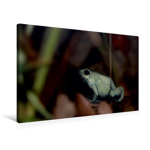 Premium Textil-Leinwand 75 cm x 50 cm quer, Schrecklicher Pfeilgiftfrosch | Wandbild, Bild auf Keilrahmen, Fertigbild auf echter Leinwand, Leinwanddruck - Coverbild