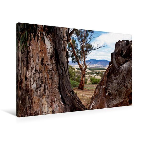 Premium Textil-Leinwand 90 cm x 60 cm quer, Eukalyptusbaum im Bonorong Wildlife Sanctuary - Tasmanien | Wandbild, Bild auf Keilrahmen, Fertigbild auf echter Leinwand, Leinwanddruck - Coverbild