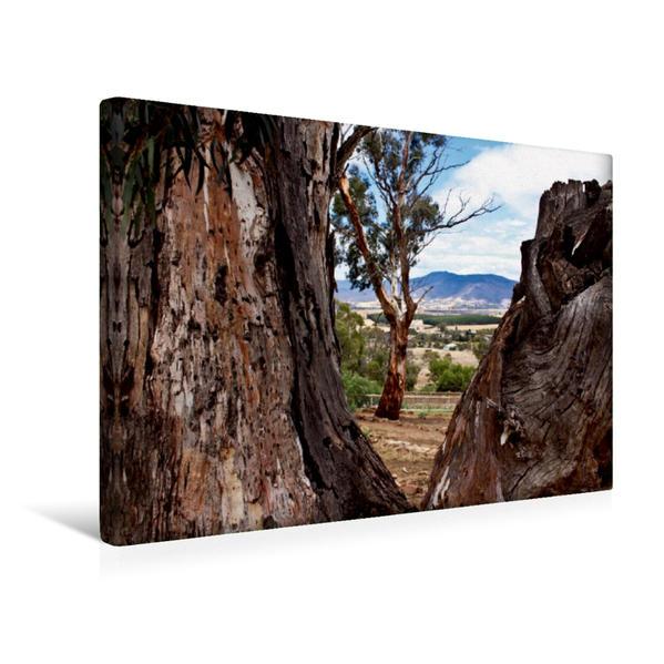 Premium Textil-Leinwand 45 cm x 30 cm quer, Eukalyptusbaum im Bonorong Wildlife Sanctuary - Tasmanien | Wandbild, Bild auf Keilrahmen, Fertigbild auf echter Leinwand, Leinwanddruck - Coverbild
