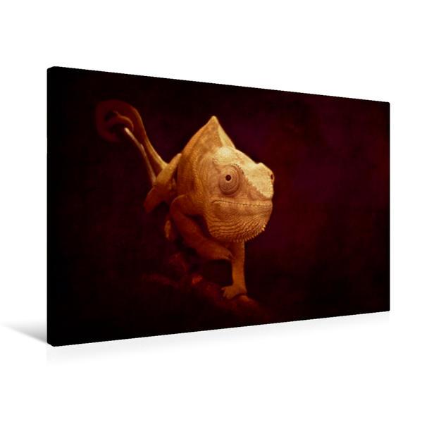 Premium Textil-Leinwand 75 cm x 50 cm quer, Chamäleon   Wandbild, Bild auf Keilrahmen, Fertigbild auf echter Leinwand, Leinwanddruck - Coverbild