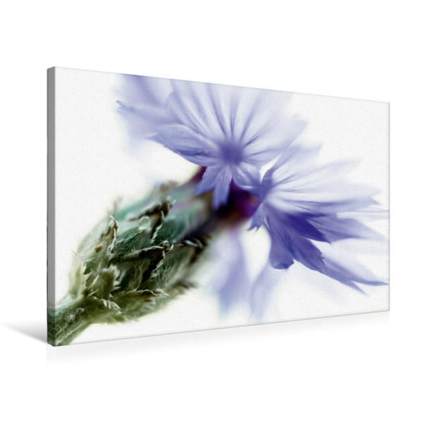 Premium Textil-Leinwand 75 cm x 50 cm quer, color_impact_IV | Wandbild, Bild auf Keilrahmen, Fertigbild auf echter Leinwand, Leinwanddruck - Coverbild