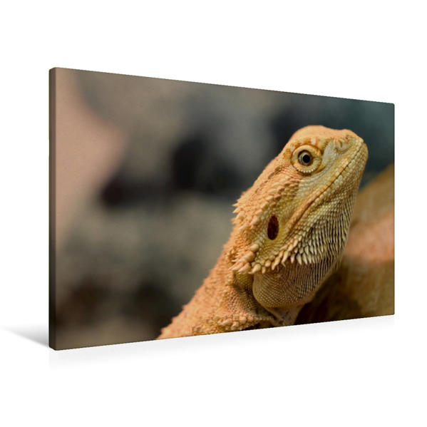 Premium Textil-Leinwand 90 cm x 60 cm quer, Bartagame | Wandbild, Bild auf Keilrahmen, Fertigbild auf echter Leinwand, Leinwanddruck - Coverbild