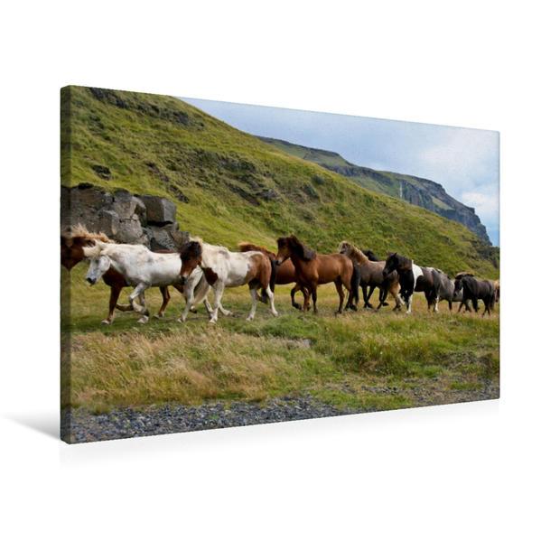 Premium Textil-Leinwand 75 cm x 50 cm quer, Islandpferdeherde | Wandbild, Bild auf Keilrahmen, Fertigbild auf echter Leinwand, Leinwanddruck - Coverbild
