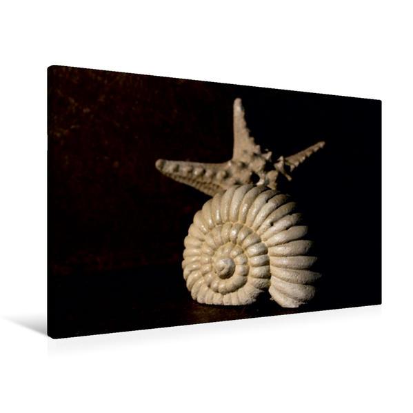 Premium Textil-Leinwand 90 cm x 60 cm quer, Seestern und Schneckenhaus | Wandbild, Bild auf Keilrahmen, Fertigbild auf echter Leinwand, Leinwanddruck - Coverbild