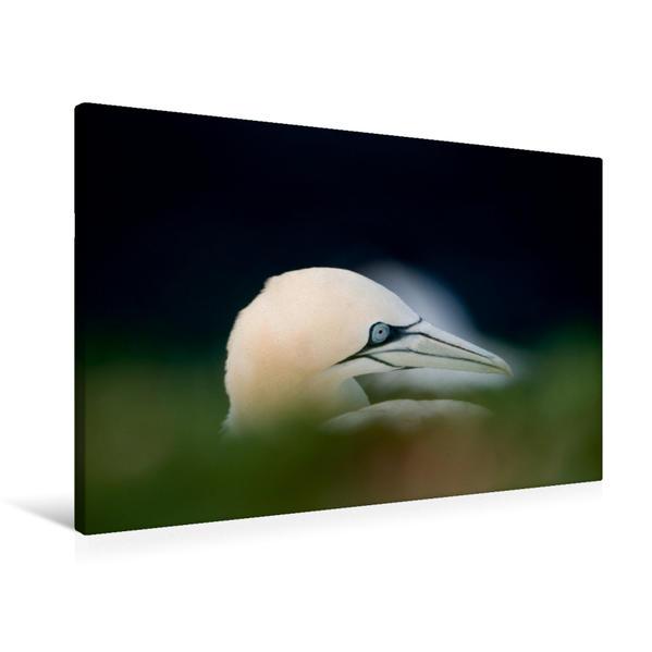 Premium Textil-Leinwand 90 cm x 60 cm quer, Elegante Vögel mit hellblauen Augenrändern. | Wandbild, Bild auf Keilrahmen, Fertigbild auf echter Leinwand, Leinwanddruck - Coverbild