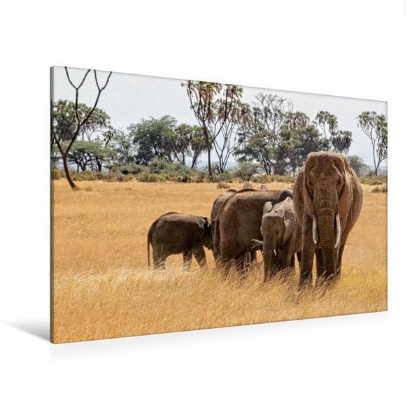 Premium Textil-Leinwand 120 cm x 80 cm quer, Ein Motiv aus dem Kalender Elefanten . Wildlife in Kenia | Wandbild, Bild auf Keilrahmen, Fertigbild auf echter Leinwand, Leinwanddruck - Coverbild