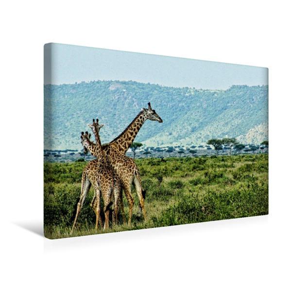 Premium Textil-Leinwand 45 cm x 30 cm quer, Ein Motiv aus dem Kalender Giraffen. Faszinierende Wildtiere Afrikas   Wandbild, Bild auf Keilrahmen, Fertigbild auf echter Leinwand, Leinwanddruck - Coverbild