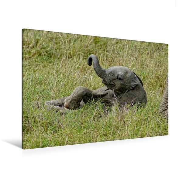 Premium Textil-Leinwand 120 cm x 80 cm quer, Ein Motiv aus dem Kalender Elefantenkinder. Spielplatz Savanne | Wandbild, Bild auf Keilrahmen, Fertigbild auf echter Leinwand, Leinwanddruck - Coverbild