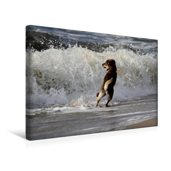 Premium Textil-Leinwand 45 cm x 30 cm quer, Schäferhund | Wandbild, Bild auf Keilrahmen, Fertigbild auf echter Leinwand, Leinwanddruck - Coverbild
