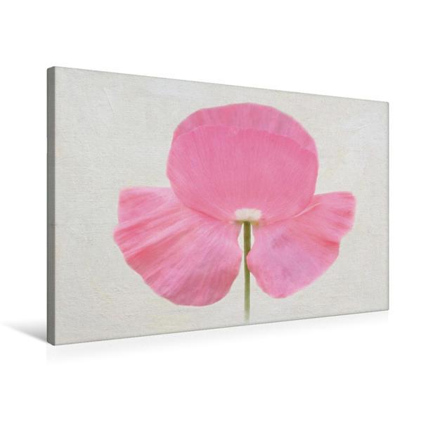 Premium Textil-Leinwand 75 cm x 50 cm quer, Rosy poppy | Wandbild, Bild auf Keilrahmen, Fertigbild auf echter Leinwand, Leinwanddruck - Coverbild