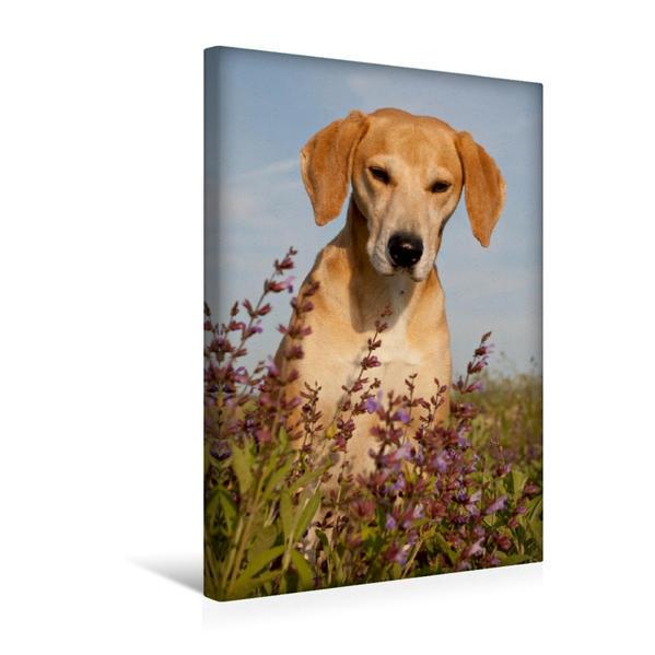Premium Textil-Leinwand 30 cm x 45 cm hoch, Porträt im Salbei | Wandbild, Bild auf Keilrahmen, Fertigbild auf echter Leinwand, Leinwanddruck - Coverbild